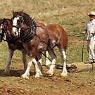 Two Working Horses - Gippsland by Bev Pascoe