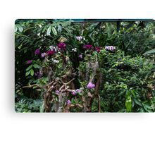 Multiple orchid flowers on a tree Canvas Print