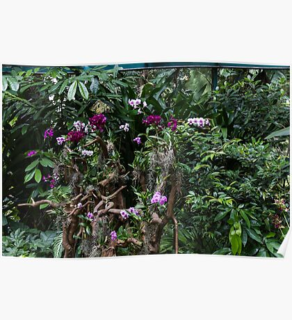 Multiple orchid flowers on a tree Poster