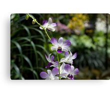 Purple orchid flower inside the National Orchid Garden in Singapore Canvas Print