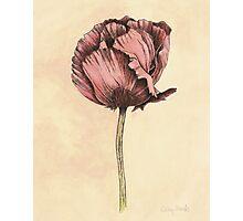 Poppy Botanical Print Photographic Print