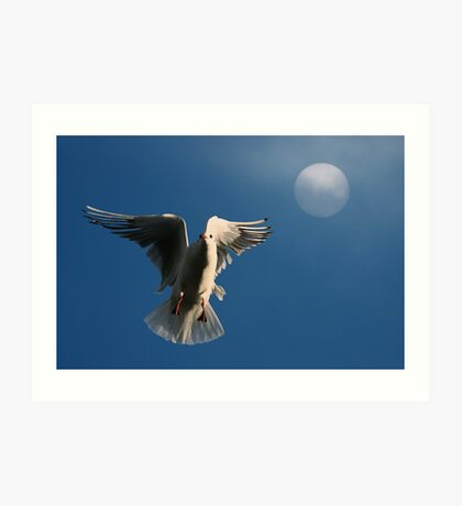 Time to Roost Art Print