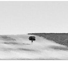 Single Tree by Mustafa Sural