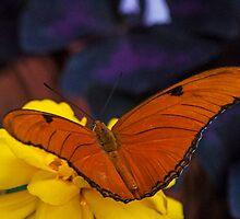 Julia Orange by gharris