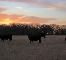 Early Morning Grazers by Paul Sturdivant