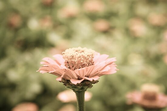 Vintage Spring by Vanessa Barklay