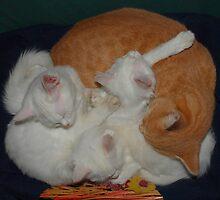 Basket of Cats by jojobob