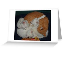 Basket of Cats Greeting Card