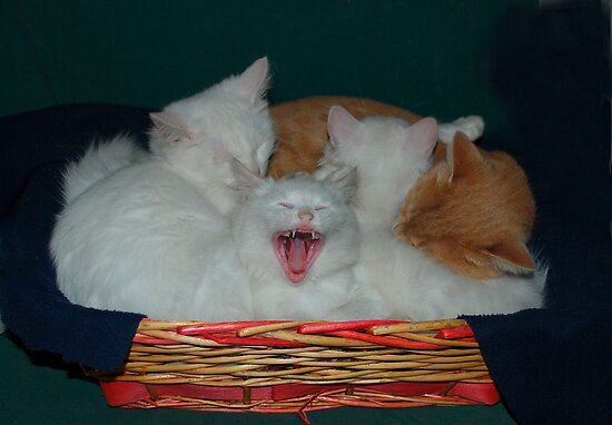Kittens in Basket with Uncle Vlad by jojobob