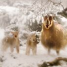 Ewe &amp; Lambs in Snow by George Crawford