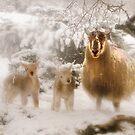 Ewe & Lambs in Snow by George Crawford