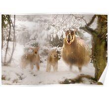 Ewe & Lambs in Snow Poster