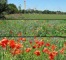 Poppy Day Didcot  by SLoD