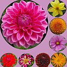 Flowers by ElsT