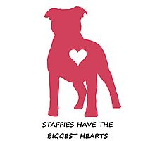 Staffies have the biggest hearts Photographic Print