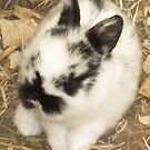 3 Week Old Baby Bunny by Michaela1991