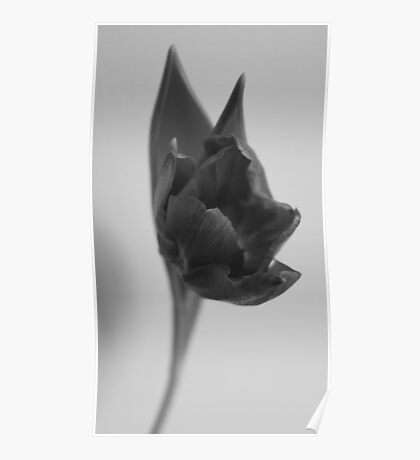 Tulip - B&W Poster