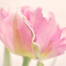 Parrot tulip's twist by IngeHG