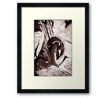 Chain Framed Print