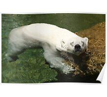 Polar Bear Hanging Out Poster