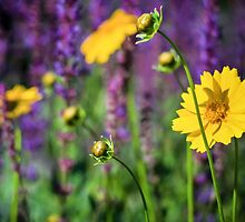 Summer Blooms by indiabluephotos