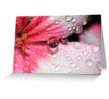 Geranium Tear Greeting Card