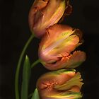 Really Big Parrot Tulips by Barbara Wyeth