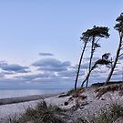 Darss-Beach by Jo-PinX
