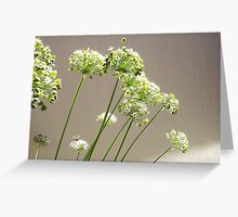 Bee - 23 03 13 - Two Greeting Card