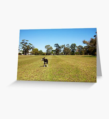Jesse - Happy Aussie Dog - What Does She See? Greeting Card