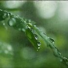 Fresh N Green by Crista Peacey
