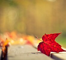 Autumn Red by indiabluephotos