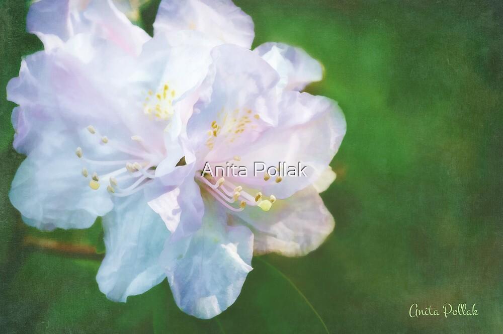Belle of the Balta by Anita Pollak