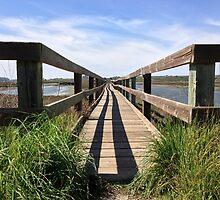 Elkhorn Slough Boardwalk by AmishElectricCo