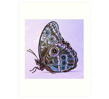 Butterfly 03 Art Print