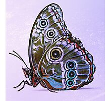 Butterfly 03 Photographic Print