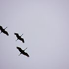 Sandhill Cranes Overhead by Betty E Duncan © Blue Mountain Blessings Photography