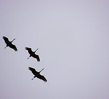 Sandhill Cranes Overhead by © Betty E Duncan ~ Blue Mountain Blessings Photography