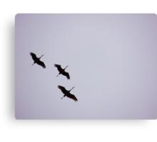 Sandhill Cranes Overhead Canvas Print