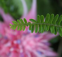 The story of the Fern and the Bromeliad  by Teacup