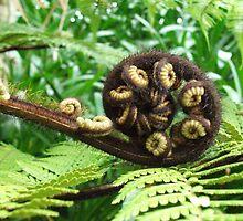New Zealand Tree Fern by Melissa Stevenson