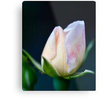 Precious Rose Bud Metal Print