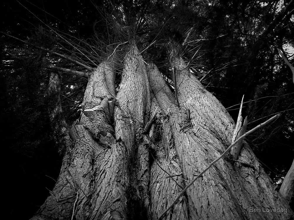 Scary Tree- Swamp Road (2) by Ben Loveday