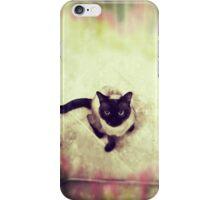 cat roma iPhone Case/Skin