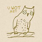 Confused Owl by Sophie Corrigan