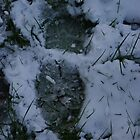 Footprint in the snow by blwalsh1