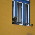 A Cat in the Window by PhotoPrints