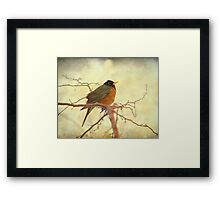 American Robin in The Springtime Framed Print