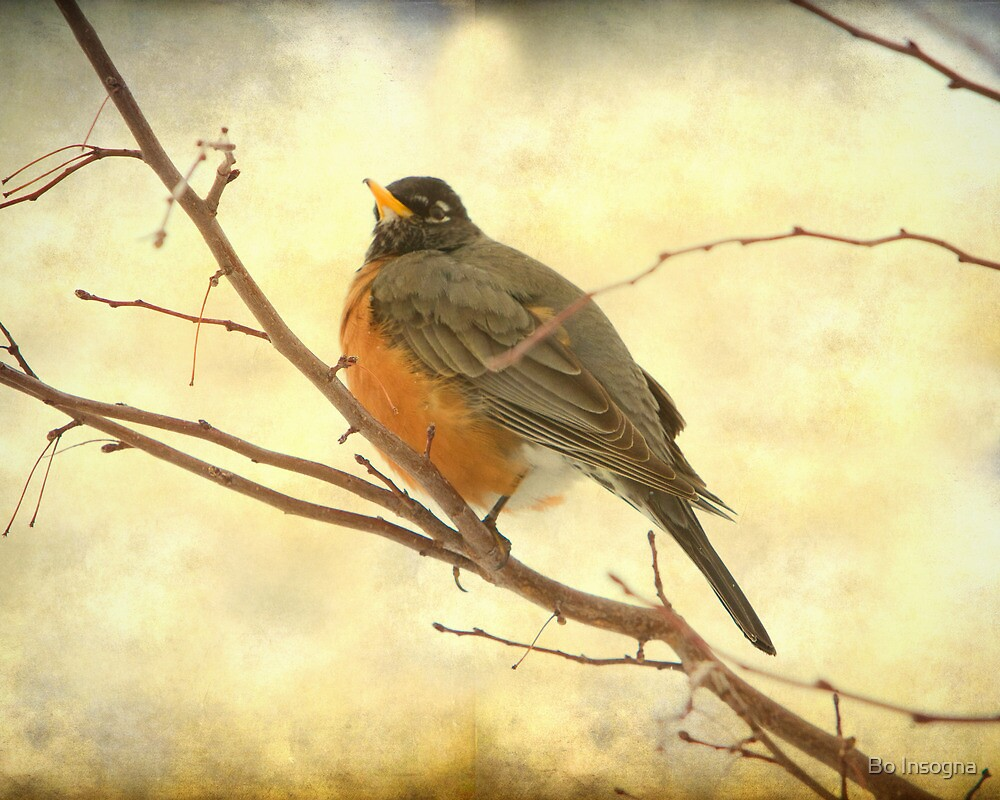 Female American Robin by Bo Insogna