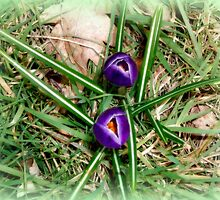 Spring Opening... by shelleybabe2